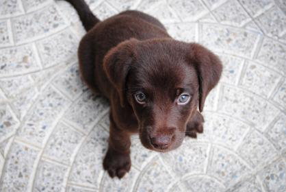 Tips to puppy proof your home.