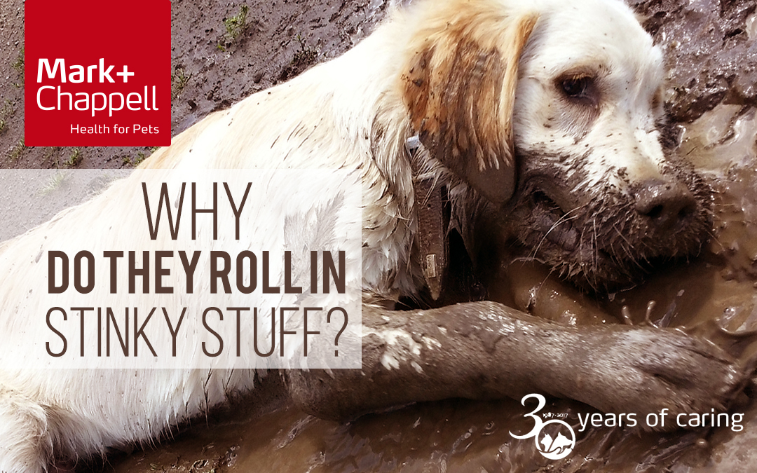 Why Does My Dog Enjoy Rolling in Stinky Stuff?