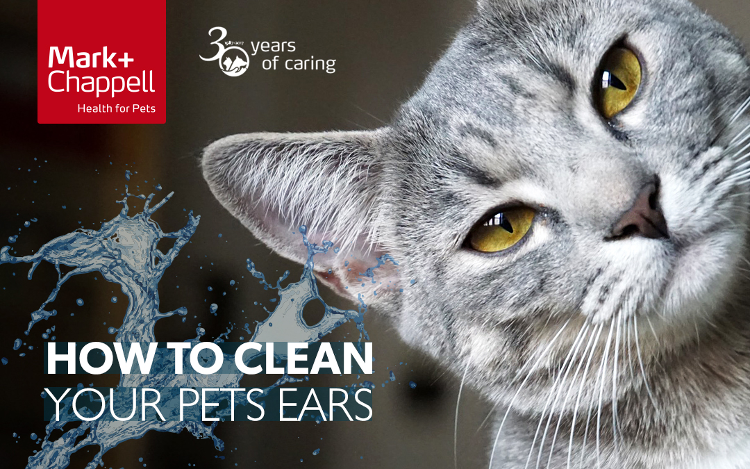 Ear Hygiene – We're all ears!!