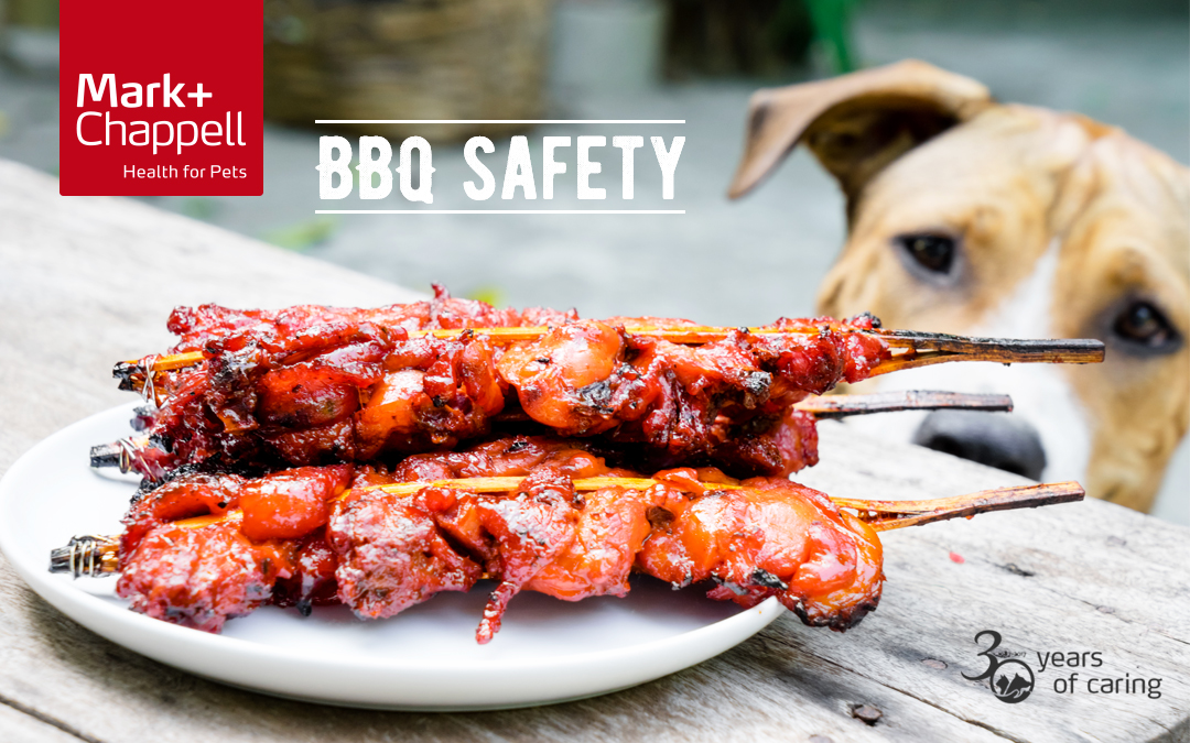 Dog out of focus near bbq chicken