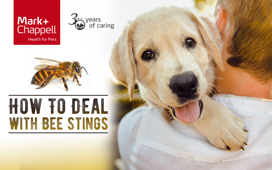 How To Deal With Bee Stings In Dogs