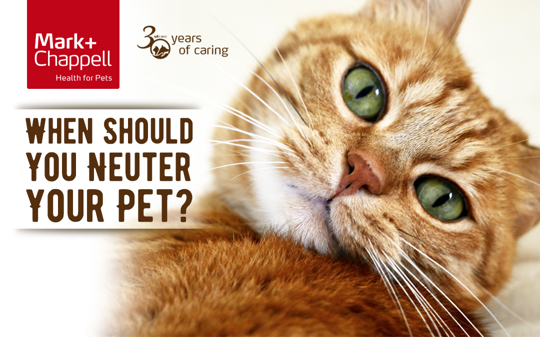Cat with When Should You Neuter Your Pet Title