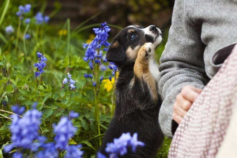 how to keep dog out of flower bed - Mark + Chappell