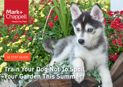 Pet Guide: How to train your dog not to spoil your garden this Summer