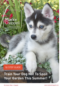 Pet Guide Sidebar Image - How to train your dog not to spoil your garden this Summer - Mark and Chappell