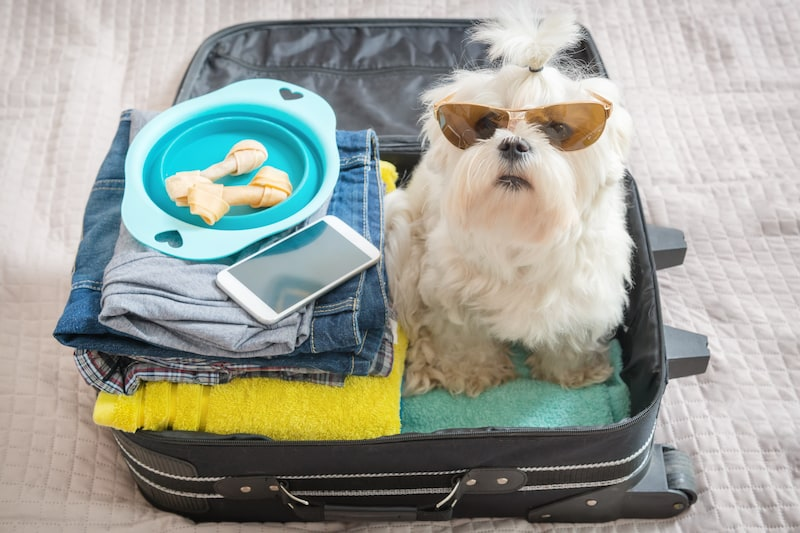 Checklist for travelling with your pet - Mark + Chappell