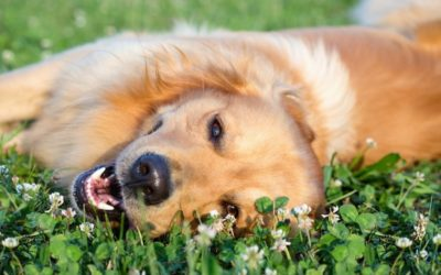 How to help your dog to overcome anxiety this Summer
