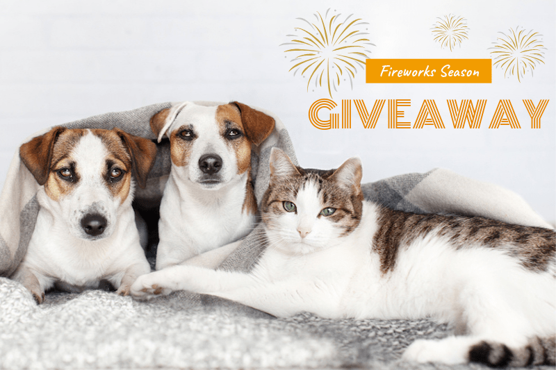 Fireworks Season Competition 2019: Serene-UM Giveaway