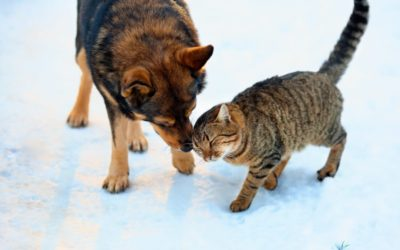How to Keep Your Pets Healthy This Winter