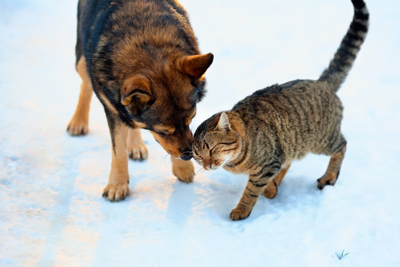 How to Keep Your Pets Healthy This Winter 2019 - Mark and Chappell