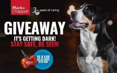 November Giveaway 2019 – Stay Safe, Be Seen!