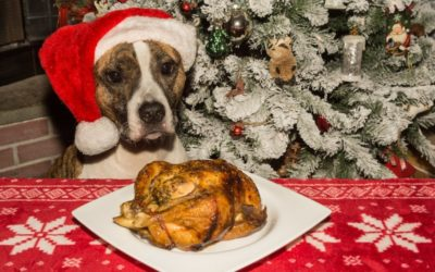 Christmas Foods That Are Poisonous for Your Pets