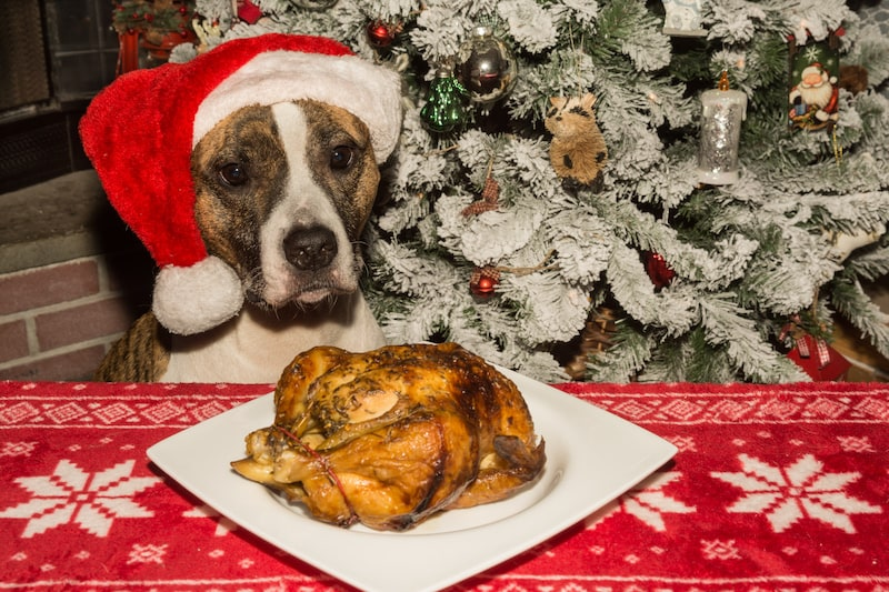 Christmas Foods That Are Poisonous for Your Pets - Mark + Chappell