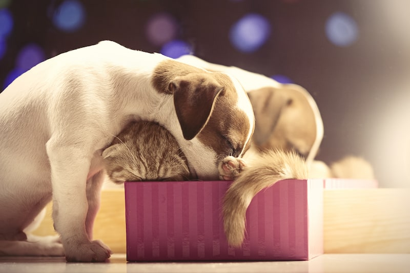 Pamper Your Pets This Christmas 3 - Mark + Chappell