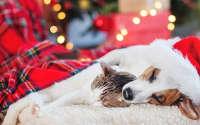 7 Great Ideas to Pamper Your Pet This Christmas