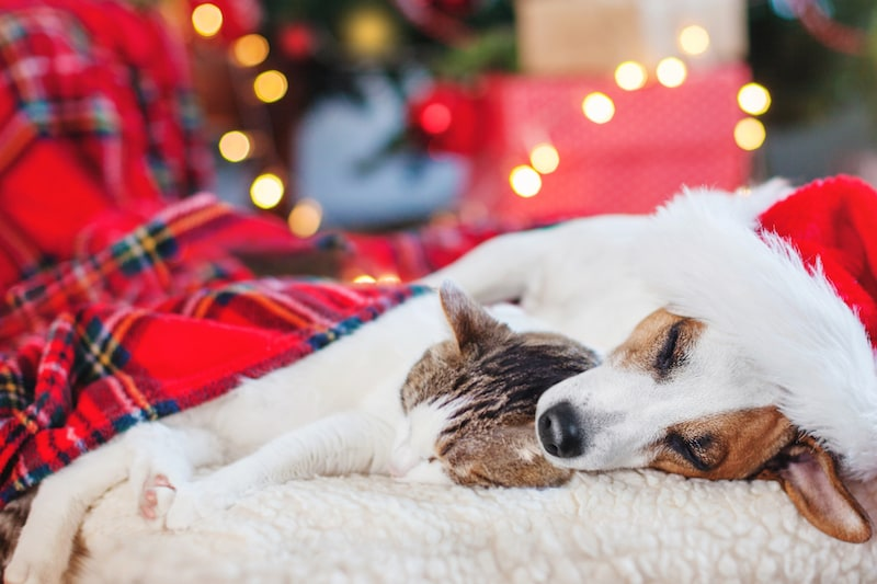 Pamper Your Pets This Christmas - Mark + Chappell