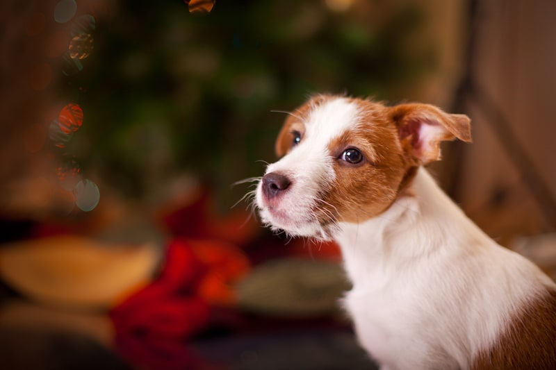 Pets Are for Life Not Just for Christmas - Mark and Chappell