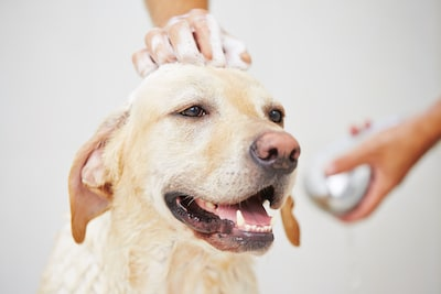 Baths - How to Make Your Dog's Coat Shiny - Mark + Chappell