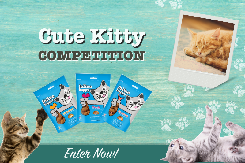 Cute Kitty Competition January 2020