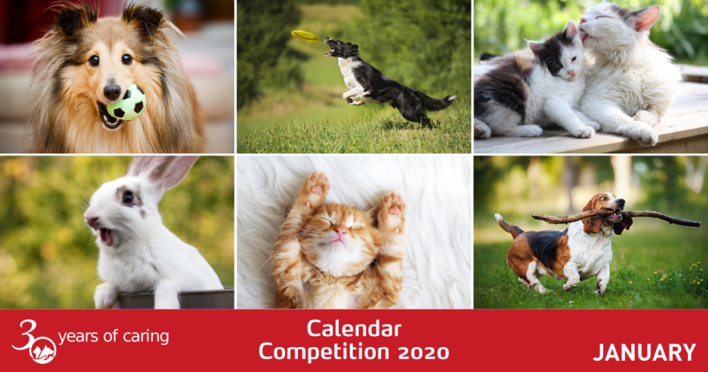 Calendar Competition January 2020 - Facebook - Mark + Chappell