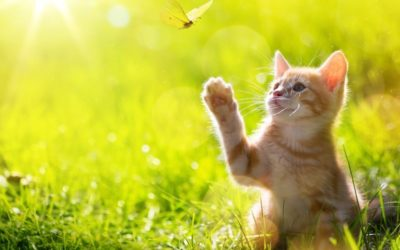 Kitten Training: What to Expect