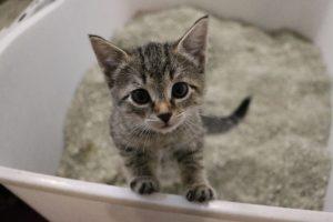 Toilet Training Your Kitten - Mark + Chappell