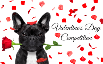 Valentine's Day Competition – February 2020