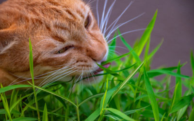 Why Does My Pet Eat Grass?
