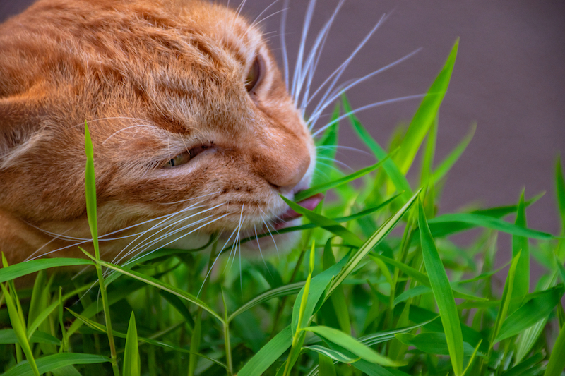 Why does my pet eat grass? Mark + Chappell
