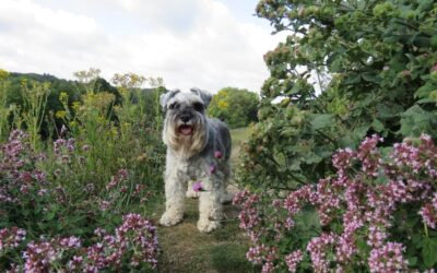 What plants are poisonous to dogs?