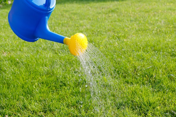 Watering Pee On The Lawn – Mark and Chappell