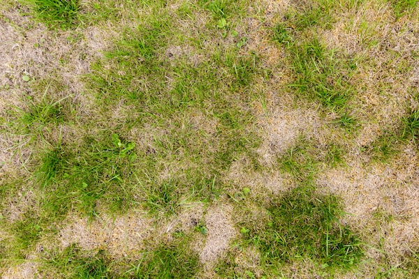 Yellow Patches On Lawn – Mark and Chappell