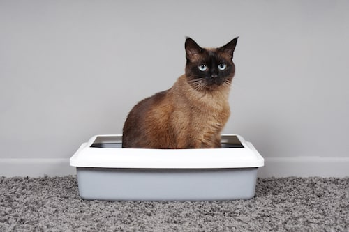 Does My Cat Have A Urinary Problem - Litterbox - Mark and Chappell