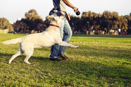 How to Keep Your Older Dog Active - Mark and Chappell