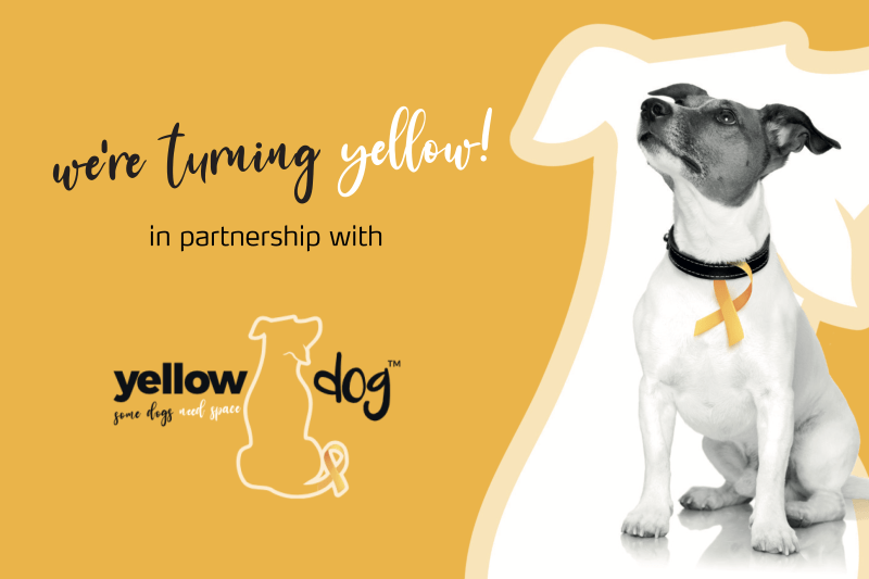 Mark + Chappell Team Up With Yellow Dog™