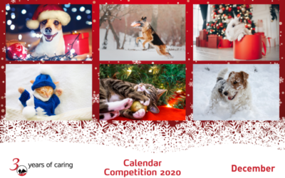2020 Pet Calendar Competition