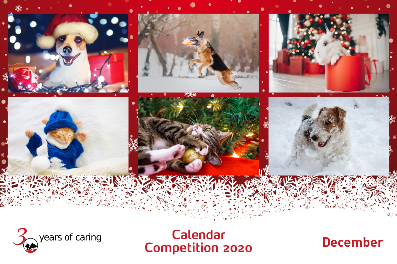 Calendar Competition December 2020 - Feature - Mark + Chappell