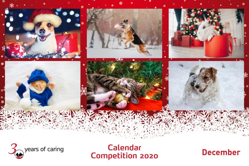 2020 Pet Calendar Competition