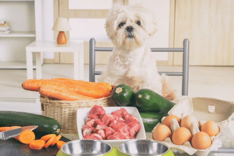 Weight Management Tips for Your Dog - Mark + Chappell