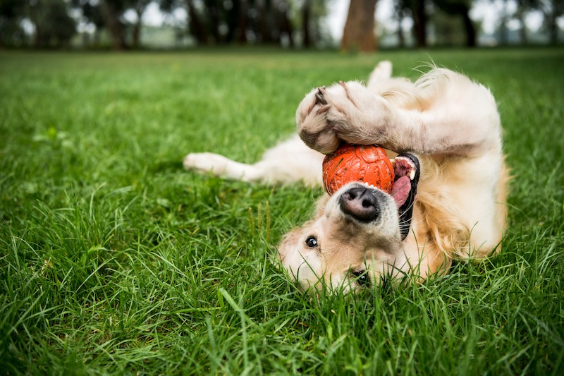 How To Keep Your Lawn Green With Dogs