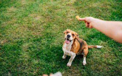 Healthy Treats for Dog Training