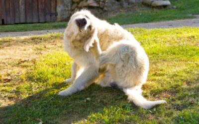 How to Prevent Fleas on Dogs