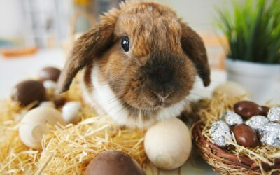 Keeping Pets Safe This Easter