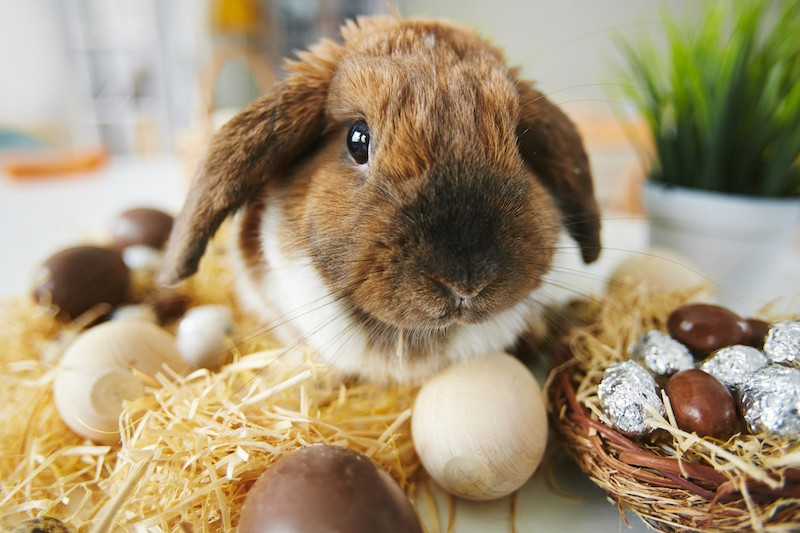 Keeping Pets Safe This Easter 1 - Mark + Chappell