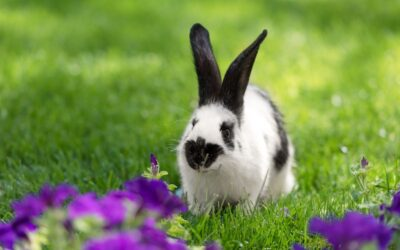 Tips For Keeping Your Rabbit Active, Healthy And Happy