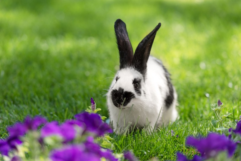 Tips For Keeping Your Rabbit Active 1 - Mark + Chappell