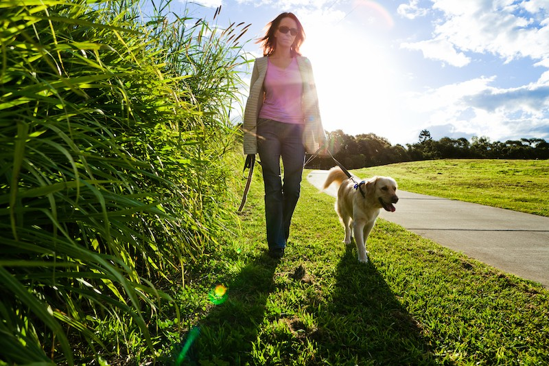 Help Your Pets Adjust To Getting Back To 'normal' - Mark + Chappell