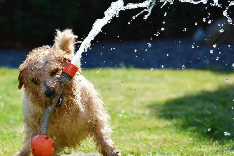 Help your pets stay cool this summer - Mark + Chappell