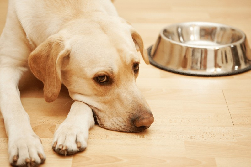 The Dog Breeds Most Prone to Anxiety - Mark + Chappell