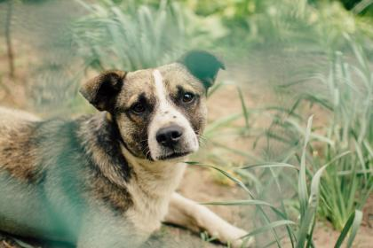 Tips to keep your dog out of the garden and flower beds.